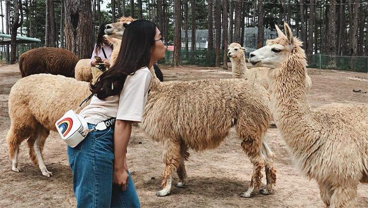 vườn thú Zoodoo ở thành phố Đà Lạt