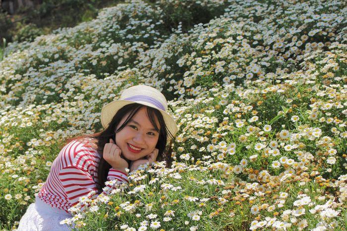 Vườn cúc họa mi ở Happy Hill Đà Lạt