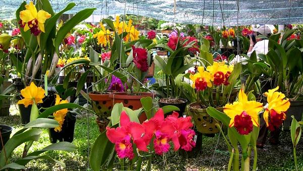 hoa nở tại vườn hoa Đà Lạt