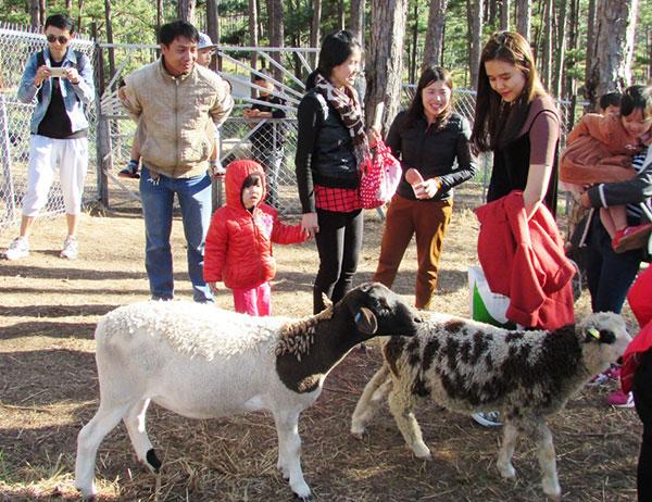 Cùng gia đình tham quan vườn thú Zoodoo Đà Lạt