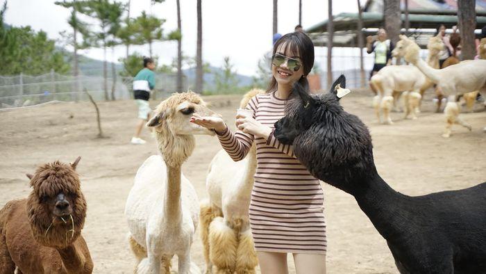 vườn thú Zoodoo thân thiện ở Đà Lạt