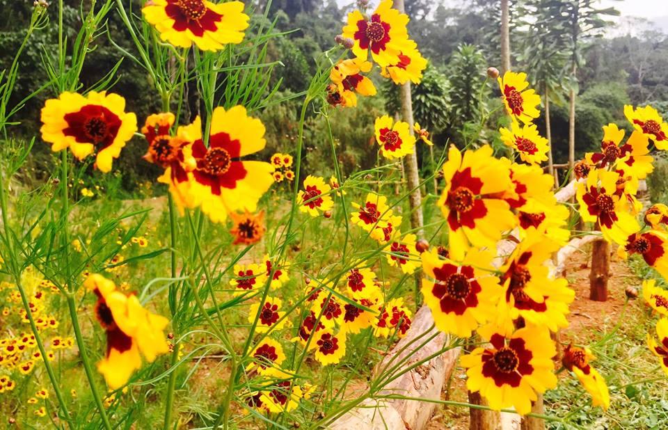 Hoa ở khu du lịch hoa sơn điền trang