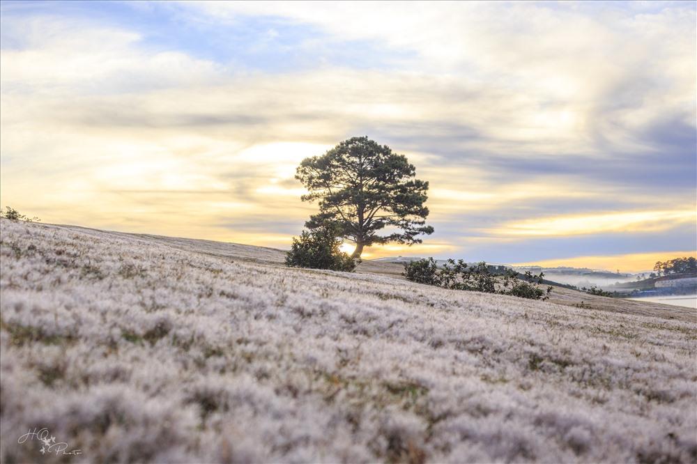đồi cỏ tuyết và bình minh.